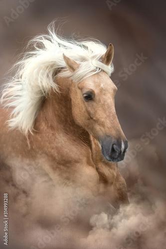 Obraz Palomino horse with long mane portrait in motion  on desert sandy dust - fototapety do salonu