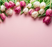 White And Pink Tulips On Lightpink Background.