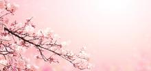 Beautiful Magic Spring Scene W...