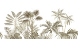 Tropical vintage beige botanical landscape, palm tree, banana tree, plant floral seamless border white background. Exotic green jungle wallpaper. - 315000072