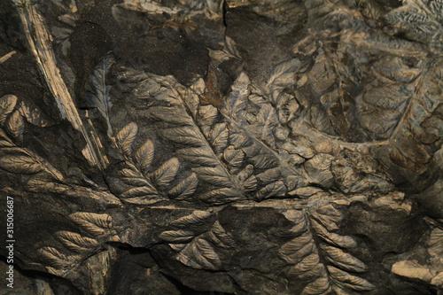 Tableau sur Toile fern plant fossil