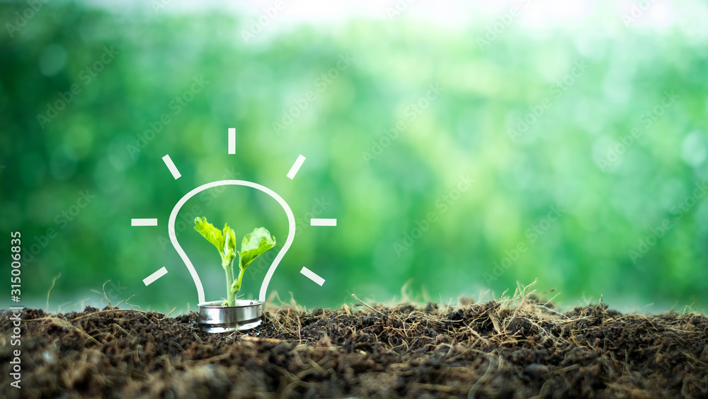 Fototapeta A small tree born on a light bulb with icons light bulb for renewable, sustainable development over blurred green nature background.  environment concept.Ecology concept.