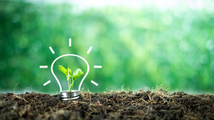 A small tree born on a light bulb with icons light bulb for renewable, sustainable development over blurred green nature background.  environment concept.Ecology concept.