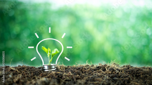 Obraz A small tree born on a light bulb with icons light bulb for renewable, sustainable development over blurred green nature background.  environment concept.Ecology concept. - fototapety do salonu