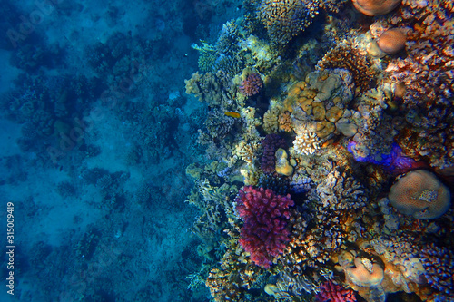 Obraz coral reef in Red Sea - fototapety do salonu