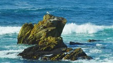 Seagull Leaps Higher On Rock A...