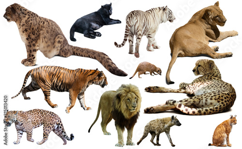 Set of wild mammals isolated over white Wallpaper Mural