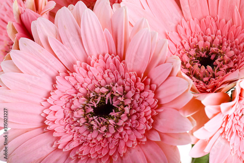 Obraz beautiful pink gerbera flower blooming in springtime - fototapety do salonu