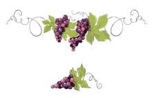 Vine, Decorative Element. Purp...