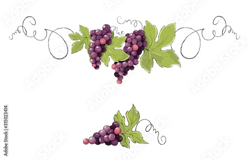 Fotografiet  Vine, decorative element