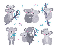 Cute Koala Bears Vector Collection. Australian Animals Wildlife Illustration Set. Koala Family, Mother And Baby On White Background