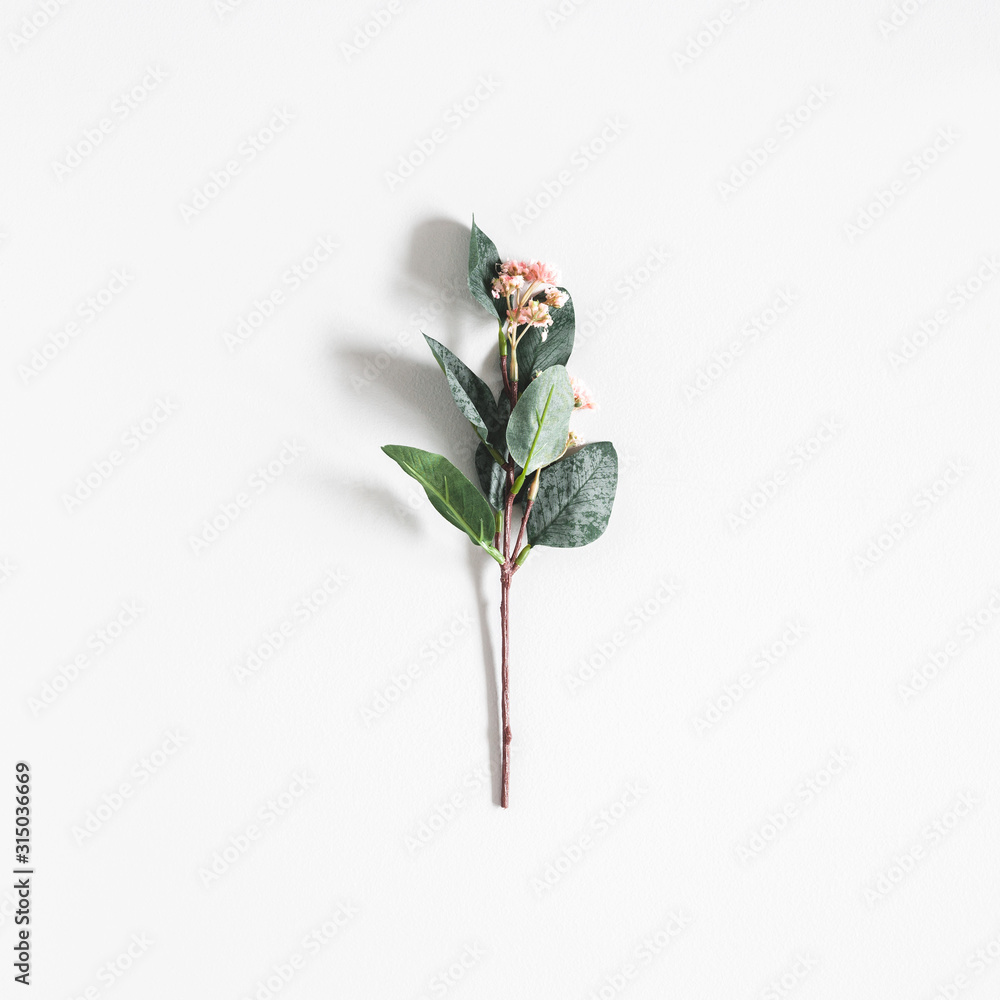 Fototapeta Flowers composition. Flower on pastel gray background. Flat lay, top view