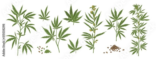 Set of different realistic green hemp with seeds Wallpaper Mural