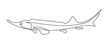 Sturgeon Fish In Continuous Line Art Drawing Style. Minimalist Black Linear Sketch On White Background. Vector Illustration