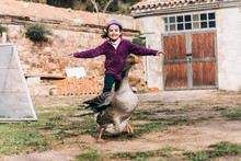 Little Girl Scaring A Goose On...