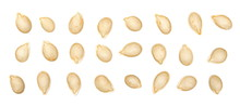Dry Muscat Squash Seeds Set An...