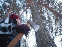 A Male Lumberjack Looks At A P...