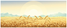 Rural Landscape With Wheat Fie...