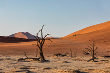 Dead Vlei Landscape With Dry Acacia In Namib Desert, Valley Sossusvlei, Namibia Africa Wilderness