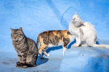 Cute Feral Cats In Blue Backgr...