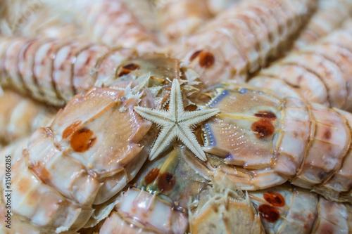 Starfish on shellfish galleys plate. Fototapeta