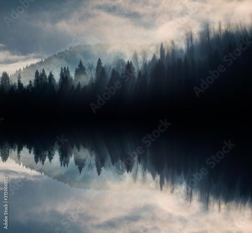 Abstrakcyjny obraz z mglistym lasem, który wygląda jak fale dźwiękowe.