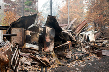 Australian Bushfire Aftermath:...