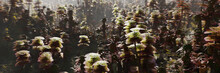 Alien Forest, Plant Life On The Surface Of An Exoplanet