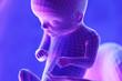 Leinwandbild Motiv 3d rendered abstract illustration of a fetus - week 16