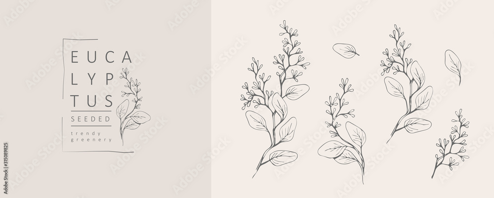 Fototapeta Seeded eucalyptus logo and branch. Hand drawn wedding herb, plant and monogram with elegant leaves for invitation save the date card design. Botanical rustic trendy greenery vector illustration