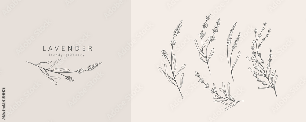Fototapeta Lavender logo and branch. Hand drawn wedding herb, plant and monogram with elegant leaves for invitation save the date card design. Botanical rustic trendy greenery vector illustration