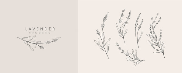 Lavender logo and branch. Hand drawn wedding herb, plant and monogram with elegant leaves for invitation save the date card design. Botanical rustic trendy greenery vector illustration