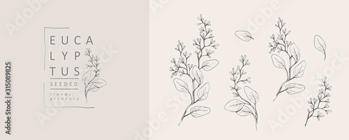 Fototapety, obrazy: Seeded eucalyptus logo and branch. Hand drawn wedding herb, plant and monogram with elegant leaves for invitation save the date card design. Botanical rustic trendy greenery vector illustration