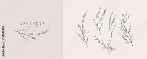 Obraz Lavender logo and branch. Hand drawn wedding herb, plant and monogram with elegant leaves for invitation save the date card design. Botanical rustic trendy greenery vector illustration - fototapety do salonu