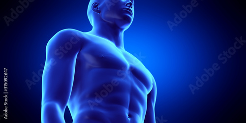 Photo  3d rendered medically accurate illustration of the male upper body