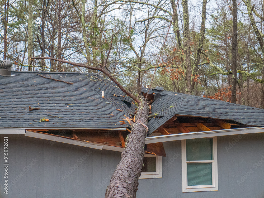 Fototapeta Storm damage tree on roof in Saks near Anniston, Alabama, January 11, 2020