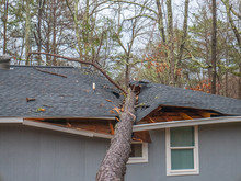 Storm Damage Tree On Roof In S...