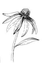 A Hand-drawn Ink Illustration ...