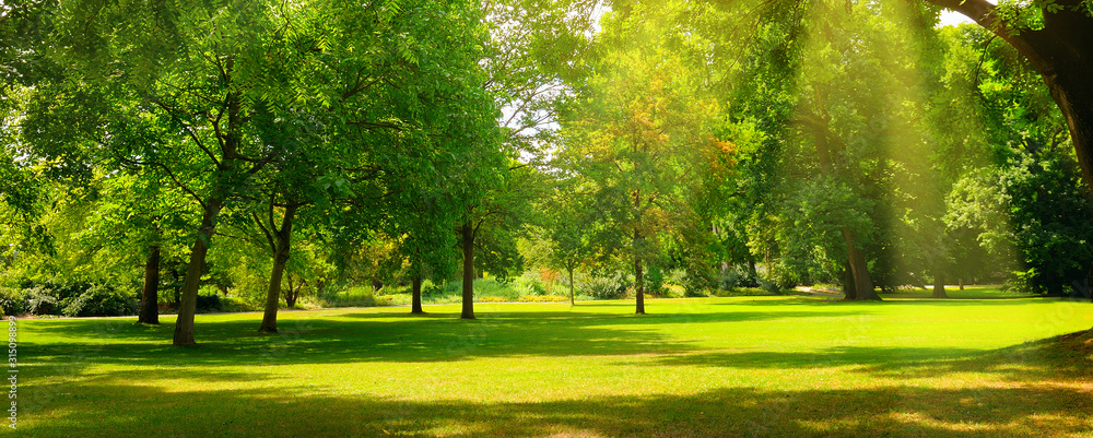 Fototapeta A summer park with extensive lawns. Wide photo.