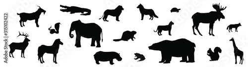 wild animals black