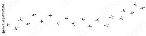 Fototapeta Footpath trail of duck obraz