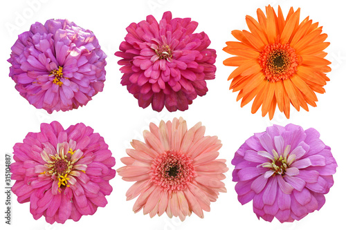 Fotomural Flowers Isolated on White background  with clipping path