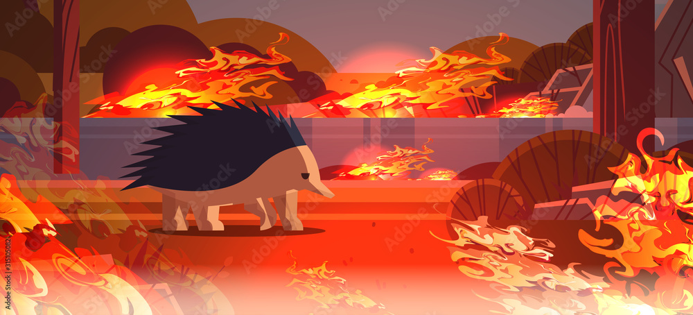 Fototapeta echidna escaping from fires in australia animal dying in wildfire bushfire natural disaster concept intense orange flames horizontal vector illustration