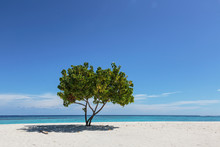 Single Tree On Sunny, Tranquil Remote Ocean Beach Under Blue Sky, Maldives