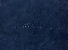 Flock Of White Birds Flying Pa...