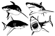 Graphical Set Of Sharks Isolated On White Background,jpg Illustration