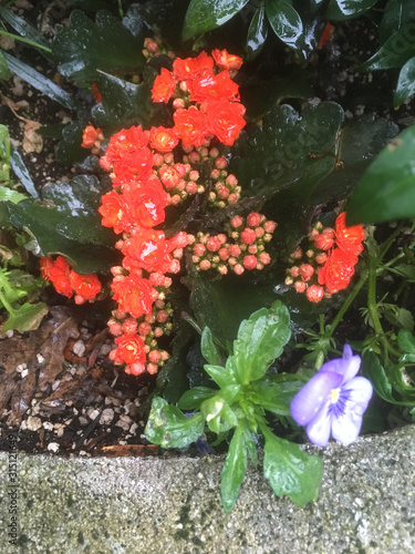 wet orange and purple flowers