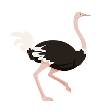 Cute Ostrich Running African Flightless Bird Cartoon Animal Design Flat Vector Illustration Isolated On White Background