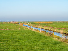 Dutch Rural Landscape With Drainage Ditch, Cows And Meadows In Polder Eempolder, Netherlands