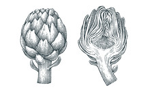 Artichokes. Hand Drawn Engravi...